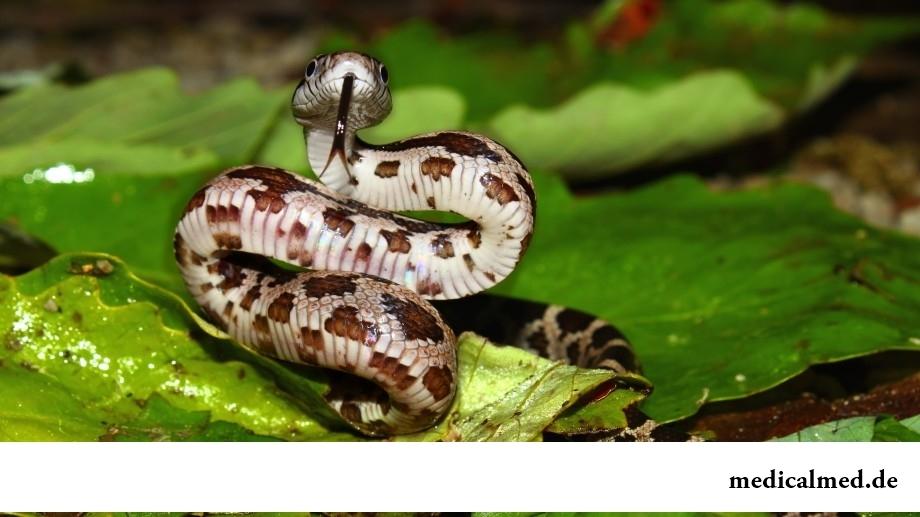 Офидиофобия (боязнь змей)