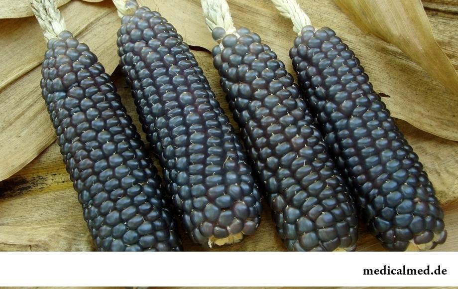 Кукуруза хопи