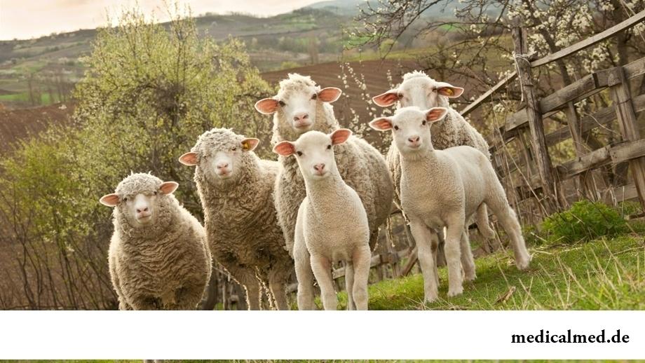 Маска для лица с плацентой овцы