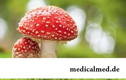 15 грибов, используемых в медицине