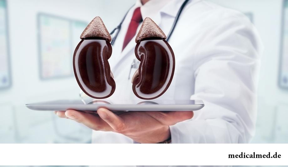 Поддержка работы мочевыводящей системы