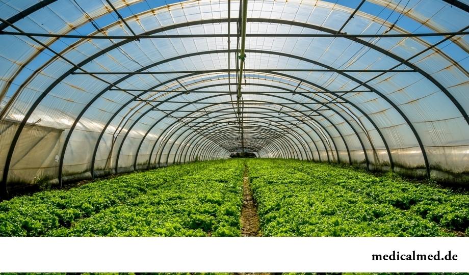 ГМО не приносят никакой пользы человечеству: так ли это?