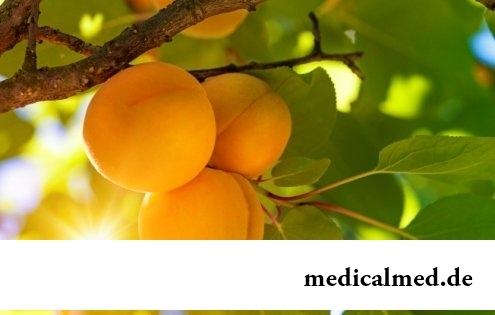 Абрикос - полезные свойства, применение, противопоказания