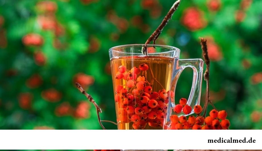 Рябина красная – лекарственное растение