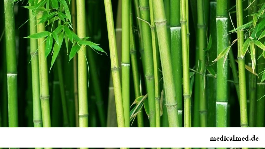 Бамбук - тропическое растение семейства Злаковых