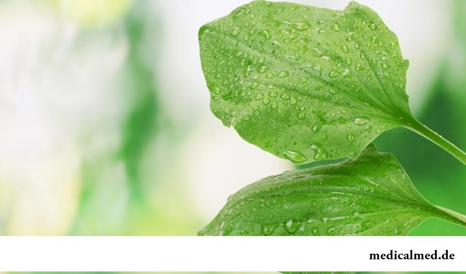 Спиртовой раствор листьев подорожника - средство, улучшающее состояние сосудов