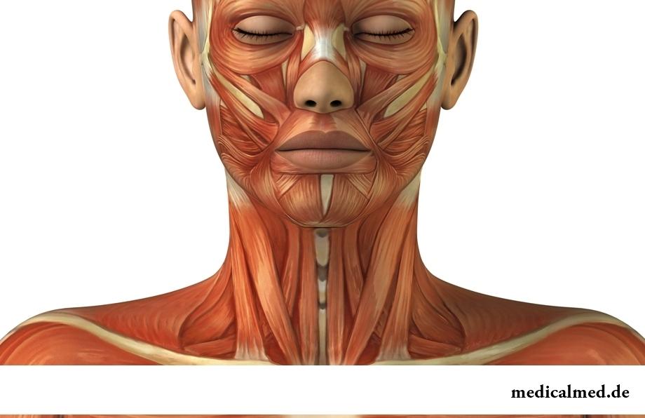 Die Muskeln des Halses — die Verstärkung, den Krampf, der Öbung