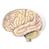 О неврологии