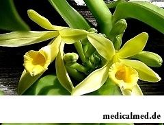 Мексика - родина натурального ванилина