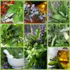 Женские травы: домашняя аптечка